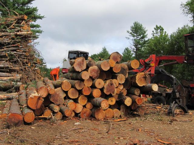 Maximizing Timber Values